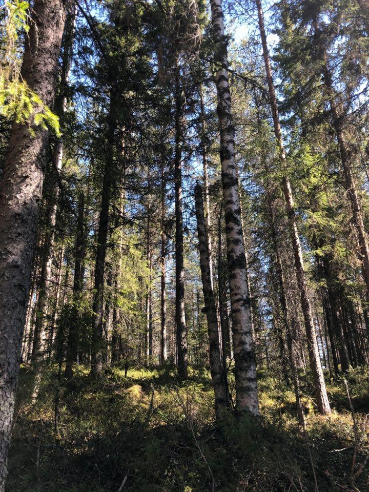 skogsbadning